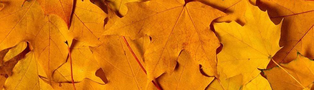 foto_autunno_355