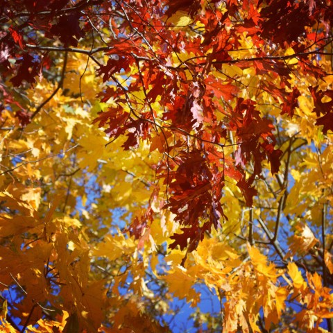 otoño mendocino