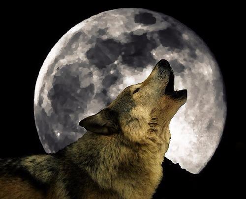 lupo luna