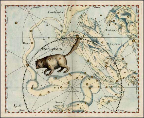 orsa polare