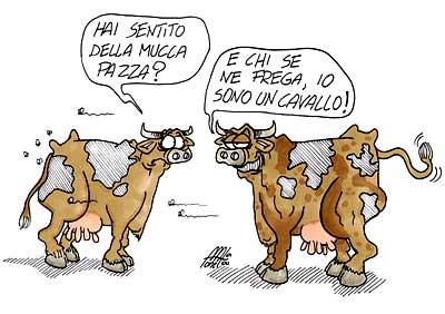 mucca-pazza